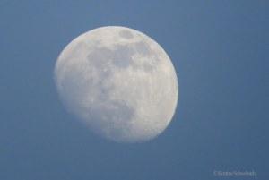 0881 moon