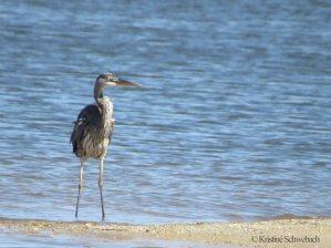 5766-heron-bird